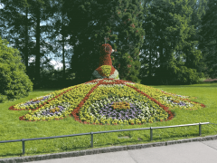 Mainau-Peacock.png
